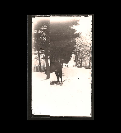 Untitled (Morton on Horse) Print
